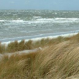 Grid_dune